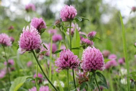 Wild flowers in a lovely meadow